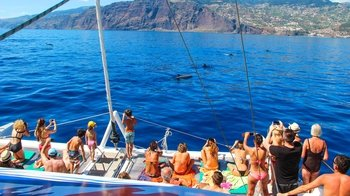 Amazing Madeira Jeep Adventure & Dolphin-Watching Cruise with Cabo Girão