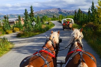 Draft Horse-Drawn Covered Wagon Tour with Backcountry Meal