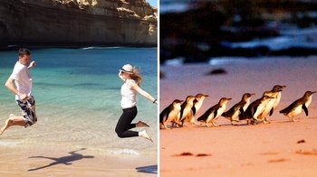 2 Tours Combo: Great Ocean Road & Phillip Island with Wheel & Zoo