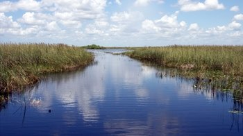 Small-Group Everglades Adventure with Lunch