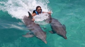 Small-Group Cozumel Dolphin Royal Swim Experience