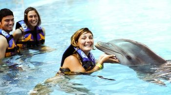 Dolphin Encounter at Aquaventuras Water Park