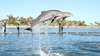 Swimming with Dolphins at Puerto Los Cabos