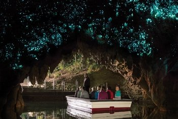 Glowworm Caves & Kiwi Bird House Full-Day Tour