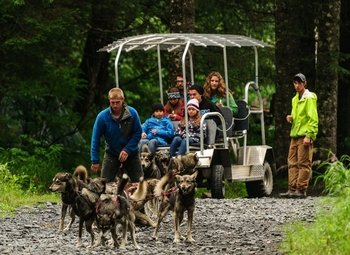 Kennel Tour & Dog Sled Ride
