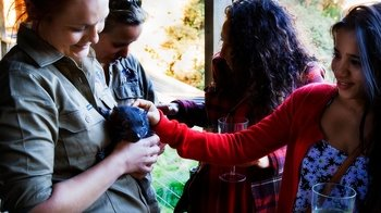 Tasmanian Devil Sanctuary Experience with Hors D'oeuvres