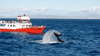 Faxa Bay Whale-Watching Cruise