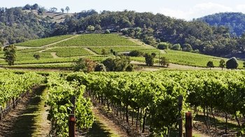 Hunter Valley Wine Tour with Australian Walkabout Wildlife Park Tickets