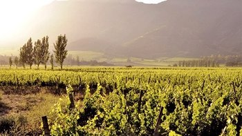Full-Day Maipo Valley Winery Tour with Lunch