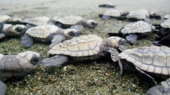 Sea Turtle Protection Tour with National Park Rangers
