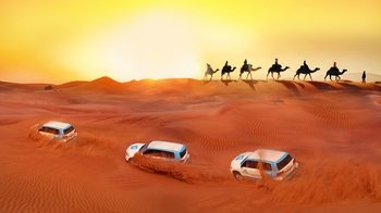Guided Desert Safari with Dune-Bashing, Sandboarding & Falcon Experience