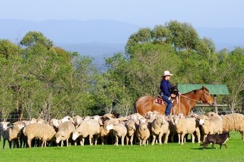 Visit to a Working Australian Outback Sheep Farm