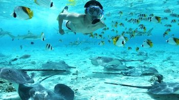 Bora Bora Lagoon Snorkeling Tour with Shark & Stingray Feeding
