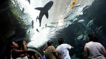 Half-Day Veracruz City Tour with Aquarium Admission