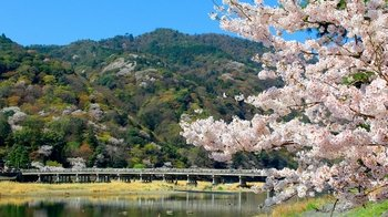 Full-Day Bus Tour to Arashiyama, Kyoto & Nara
