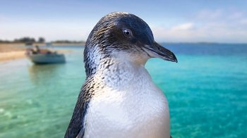 Small-Group Penguin Island Adventure Tour from Perth