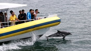 Jervis Bay Dolphin-Watching Eco Cruise