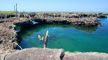 5-Day Guided Galapagos & Los Tuneles Tour