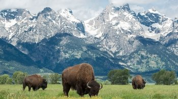 Grand Teton Small-Group Wildlife Safari