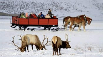 Grand Tetons & National Elk Refuge Winter Day Trip
