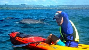 Dolphin-Spotting Sea Kayaking Tour