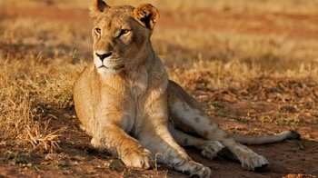 Half-Day Lion & Safari Park Tour