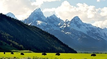 Full-Day Grand Teton National Park Wildlife Tour