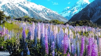 Full-Day Christchurch to Queenstown Tour with Lake Tekapo & Mount Cook