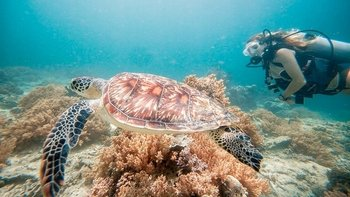 Full-Day Snorkelling Tour of Lombok & Pink Beach with Lunch