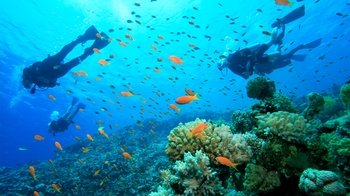 Full-Day Gili Islands Snorkeling Tour