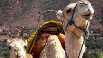 Private Camel Ride & Sightseeing in the High Atlas Mountains