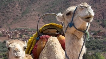 Sunset Tour & Dromedary Ride at Palm Grove