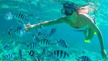 Guided Snorkel Adventure in Paradise Cove