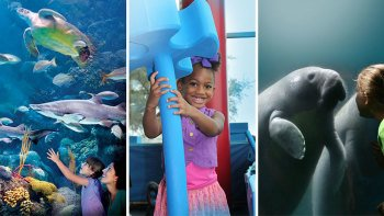 Triple Pass: Lowry Park Zoo, Museum of Science & Industry & Florida Aquariu...