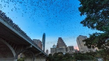 Congress Bridge Bats Guided Evening Kayak Tour