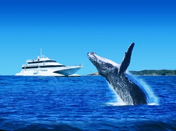 Whale-Watching Lunch Cruise with Tangalooma Island Resort Day Trip