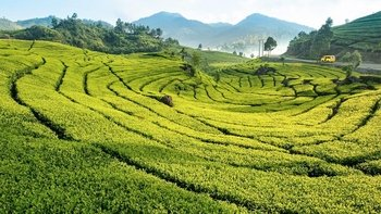 Private Full-Day Excursion to Gunung Mas Tea Plantation