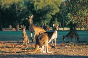 Perth Hills 1 Day Experience with Camel Ride