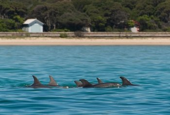 1 Hour Dolphin and Seal Sightseeing Boat Tour