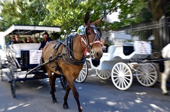 Royal Carriages French Quarter History Carriage Tour