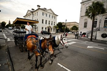 Evening Carriage Tour of Historic Charleston