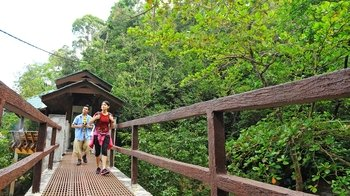 Private Morning Jungle Trek to Penang National Park