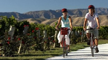 Marlborough Region Bicycle Tour & Wine Tasting