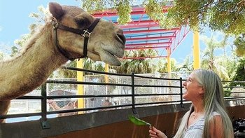 Zoo Miami Safari Package with Monorail & Animal Feeding