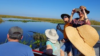 One Hour Air Boat Ride and Nature Walk with a Naturalist in Everglades Nati...
