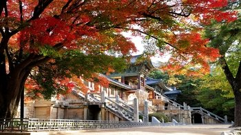Private Full-Day Gyeongju Tour with Driver