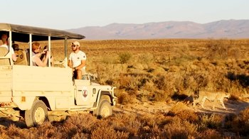 Full-Day Safari from Cape Town