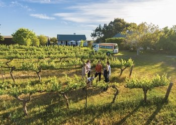 Barossa Valley Highlights Wine & Food Tour