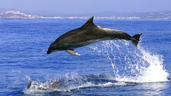 Gibraltar Dolphin-Watching Cruise from the Costa del Sol