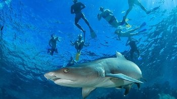 Ultimate Encounters - Snorkel with Sharks